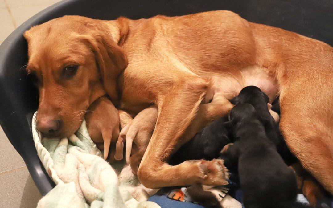 Roxy et ses bébés