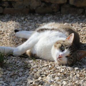 Chat Refuge de Jouvence SPA Messigny