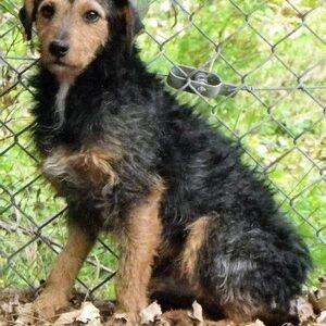 ARSENE - x jagd terrier 6 ans   (4 ans de refuge) - Refuge de Jouvence à Messigny (21) 347qQnPKQrQSvn24wZaPQ3peJnoXMjm9-300x300