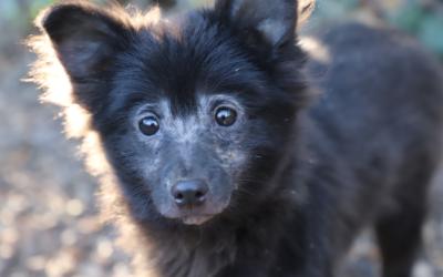 Sauvetage de 15 chiens le 22 octobre 2020