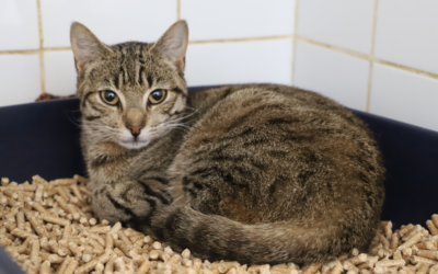 Sauvetage de 20 chats le 26 mai 2020