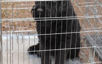 Saisie d'élevage le 13 mars 2019