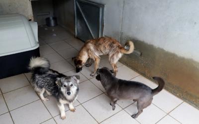 Sauvetage chiens roumains le 30 novembre 2018